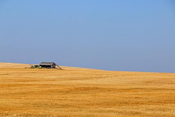 A Golden Field