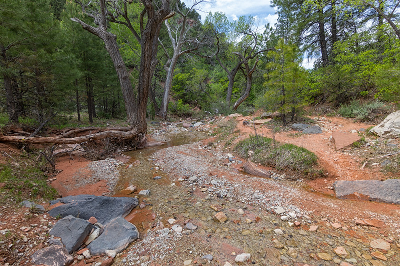taylor creek trail