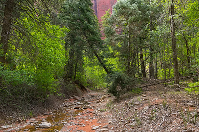 The trail following the Middle Fork of Taylor Creek with a bit of the canyon wall peeking through the trees.