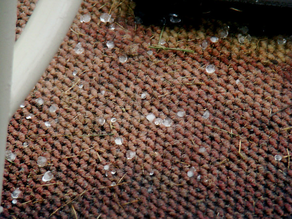 "04.10.2009 Hail, Ice pellets: 3/8"" to 1/2"" Clear. <br /> 1:55pm EST.  Fall duration 1 Min. Melted almost instantly.<br /> 38.221010°<br /> -84.817510°<br /> alt: 735 ft / 224m"
