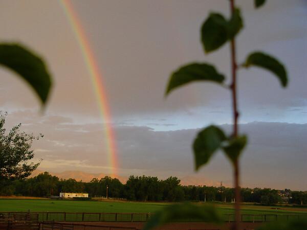 rainbow01175