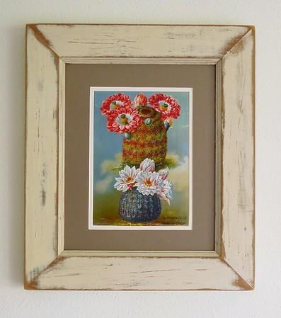 Rainbow Cactus & Mammillaria Childsi
