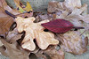 Post oak leaf cared from cedar and walnut, sumac leaf from padauk and walnut