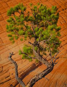 Juniper and Sandstone