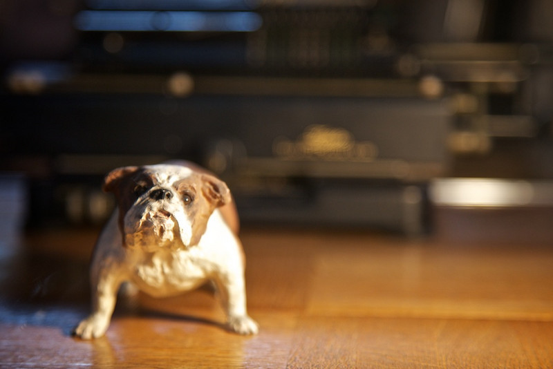 Finally a bulldog in Japan, albeit two inches tall.