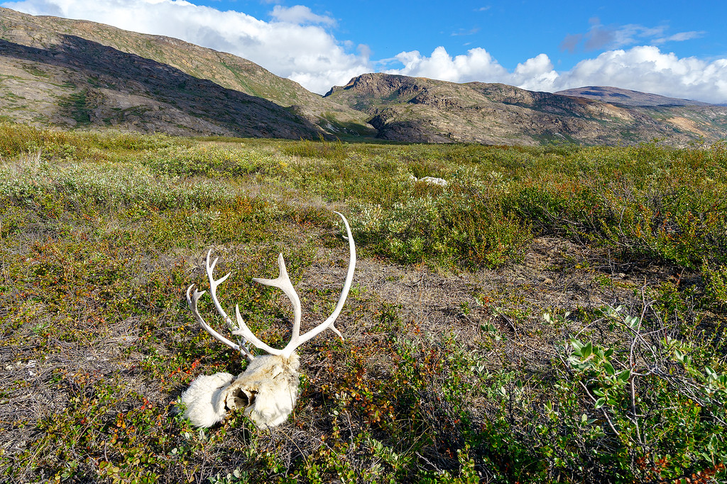 Arctic Circle Trail Bones