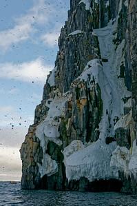 Bird cliffs, Alkefjellet.