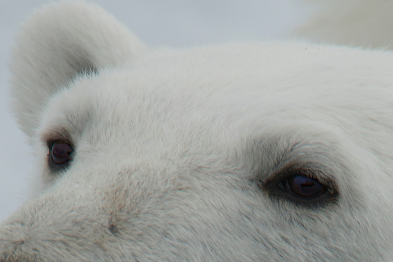 Ever been so close to a polar bear that you could see your ship in his eye?