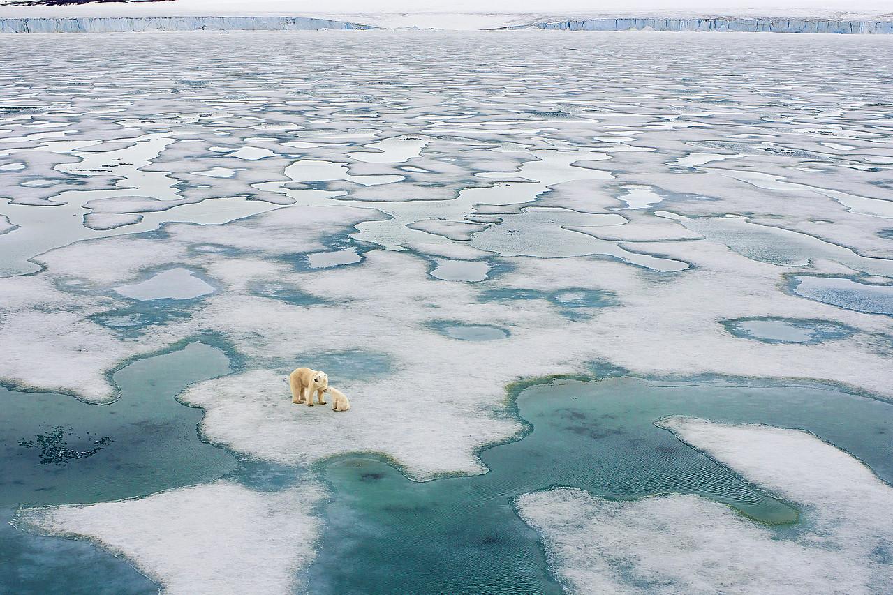 Polar bear and cub on pack ice.