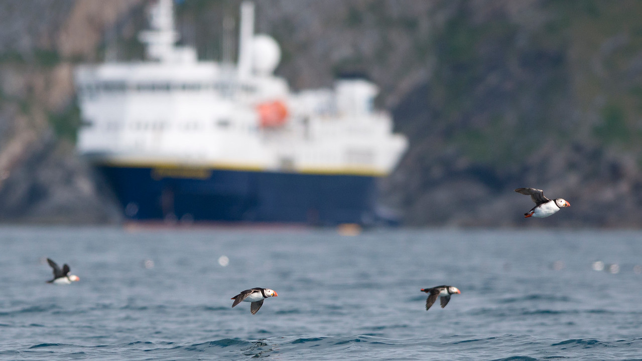 Puffins with the National Geographic Explorer in background.