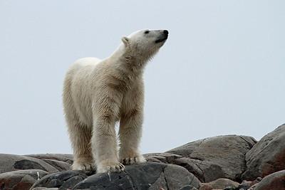 ARCTIC - Adventurous Regal Cruise To Ice Cap