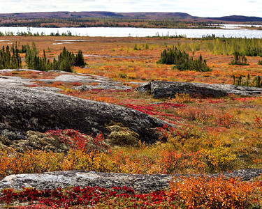 The beautiful color mix of the tundra is hard to imagine without seeing it for your self.  Cranberries and blueberries(and many other kinds) at your feet!!
