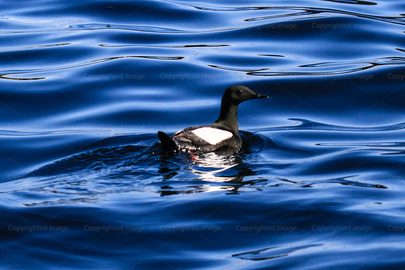 CRay-SeabournArctic-3893