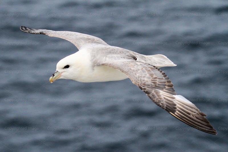CRay-Seabourn-3656