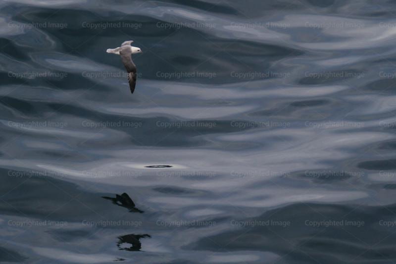 CRay-Seabourn-3064