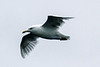 CRay-Seabourn-3530
