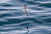 CRay-Seabourn-3057