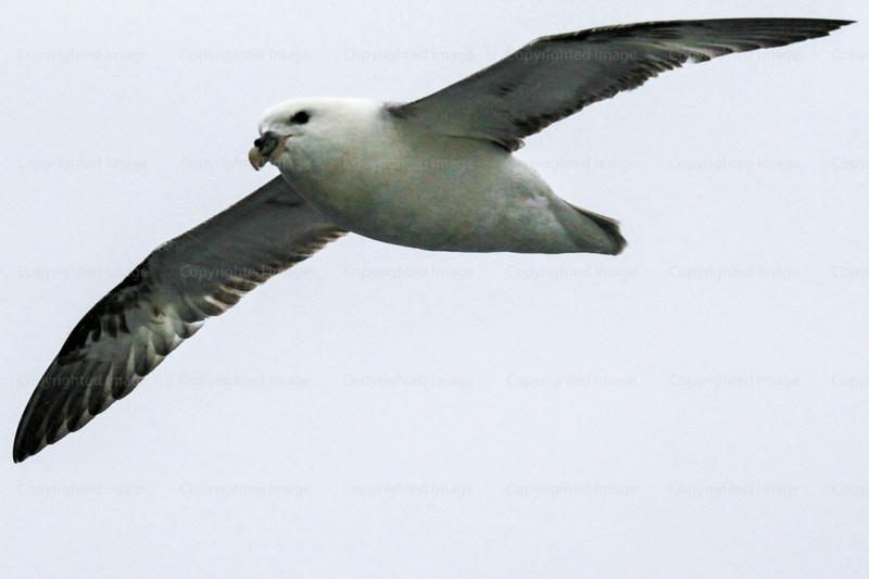 CRay-Seabourn-3581