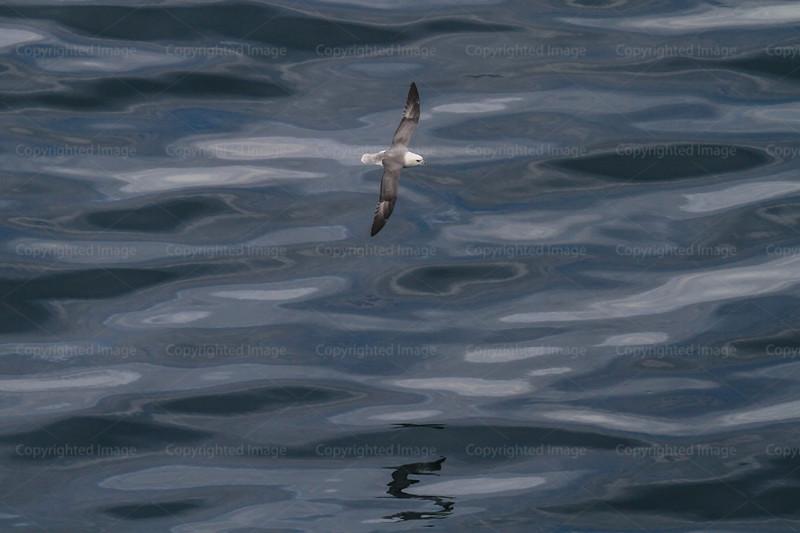 CRay-Seabourn-3065