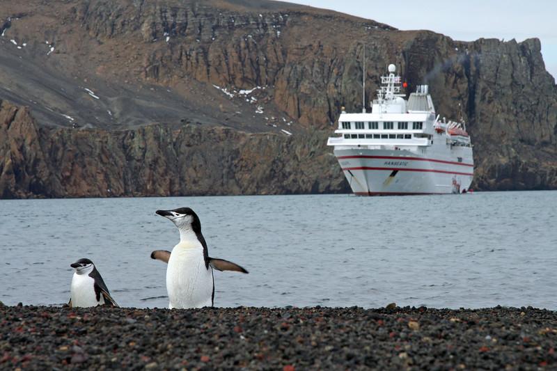 Chinstrap Penguins at Deception Island, Antarctica