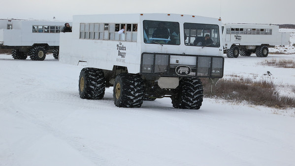 These tundra buggies are pretty funny looking, but how else would you get around?