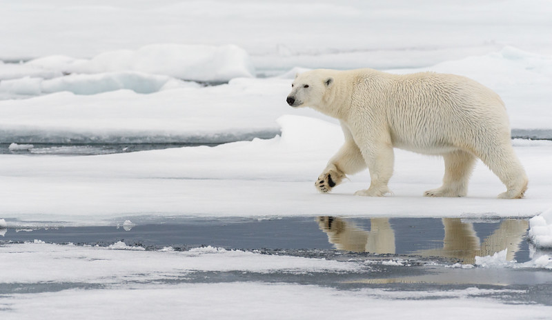 A Walk On The Ice