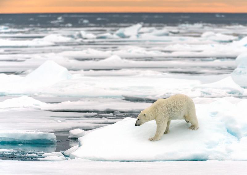 Patroling For Seals