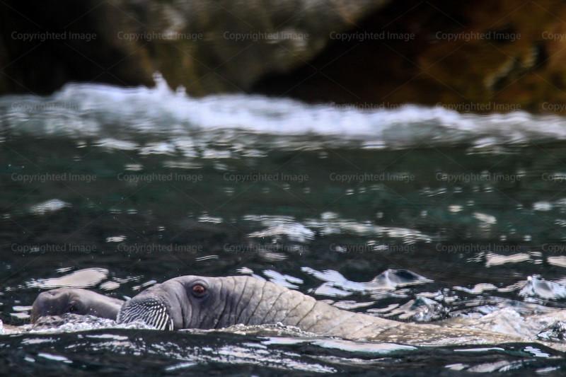 CRay-Seabourn-4318