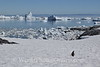 Port Charcot at Pleneau Island Iceberg Graveyard