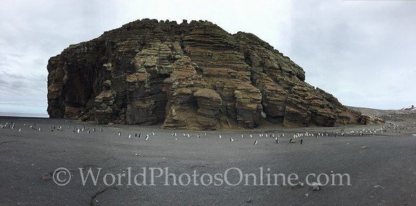 Chinstrap Penguin Colony in Whaler's bay at Deception island