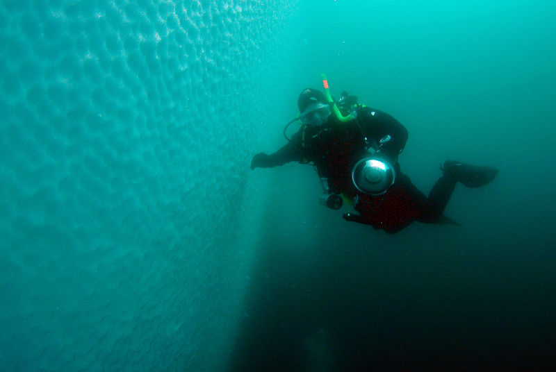 Diver, Pat Dykstra, by iceberg - water temperature is -1C (30F).