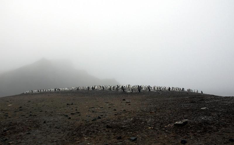 09-Penguins
