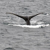 07-Humpback Whale