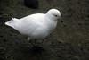 13b-Bird