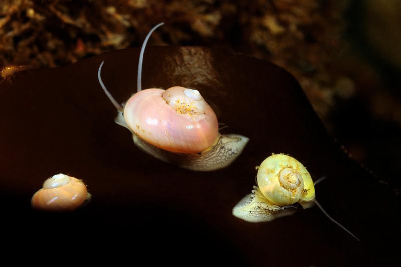 Snails_110625