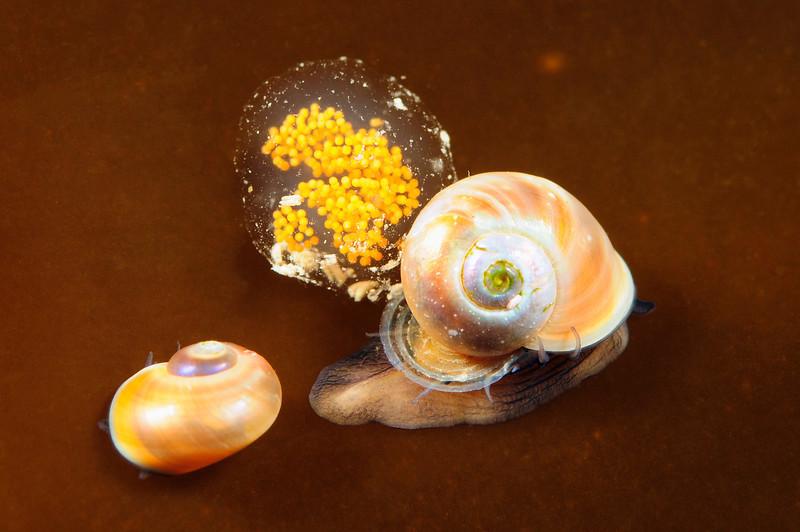 Snails_110624_work
