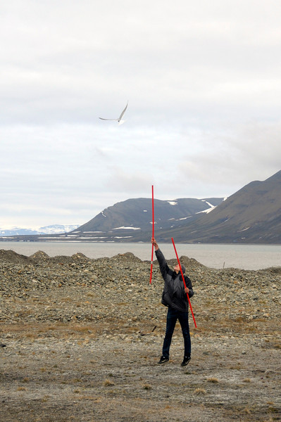 Evan, using winter snow markers to fend off Arctic terns