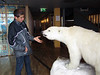 Polar bear greets Evan, in the Longyearbyen City Hall