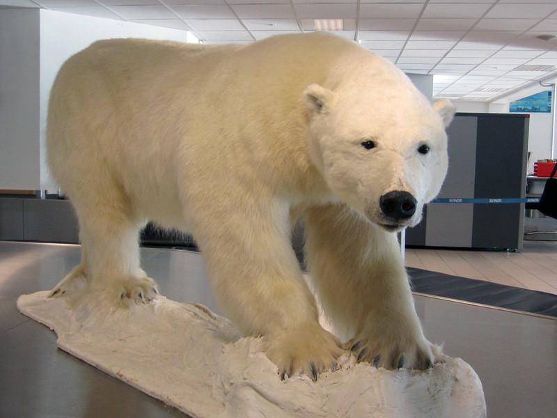 Polar bear greeting.