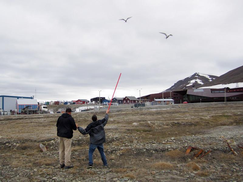 Evan warding off aggressive, territorial terns