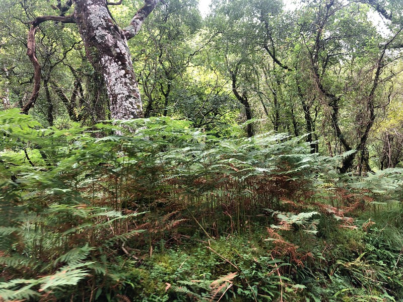 Dive #7<br /> Enroute to Lephinchapel dive site. Bracken and thick foliage grow in the woods.<br /> Loch Fyne (longest in Scotland).