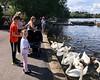 Kids feeding swans in Linlithgow Loch, Scotland
