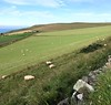 Sheep grazing on verdant hillsides<br /> Scotland