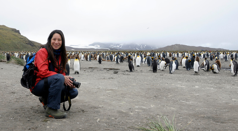 Lilian with King Penguin friends<br /> Salisbury Plain, Bay of Isles, South Georgia