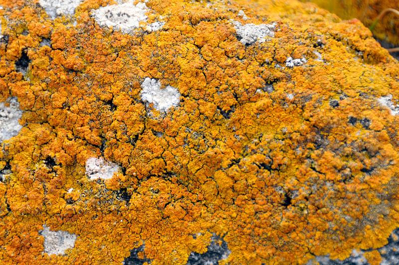 LIchens on rock<br /> East Falkland Island