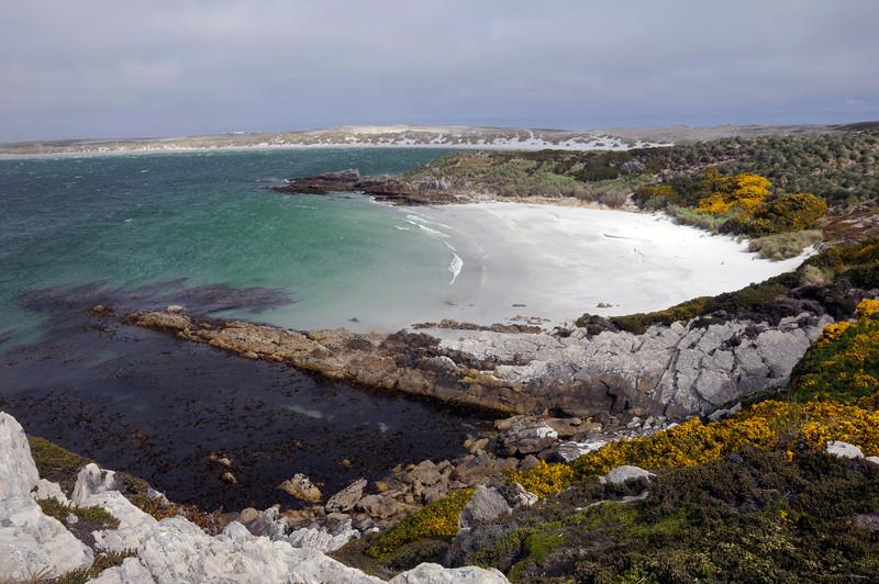 Gypsy Cove.<br /> East Falkland Island.