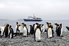 King Penguins, with our ship, Plancius, in background.<br /> Salisbury Plain, South Georgia Island.