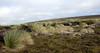 Landscape, East Falkland Island