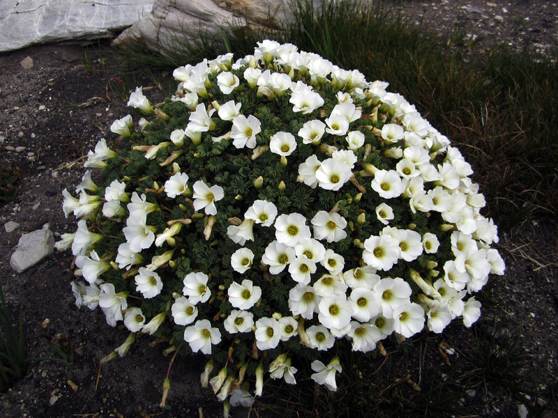 Flowers<br /> East Falkland Island