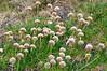 Flora<br /> East Falkland Island